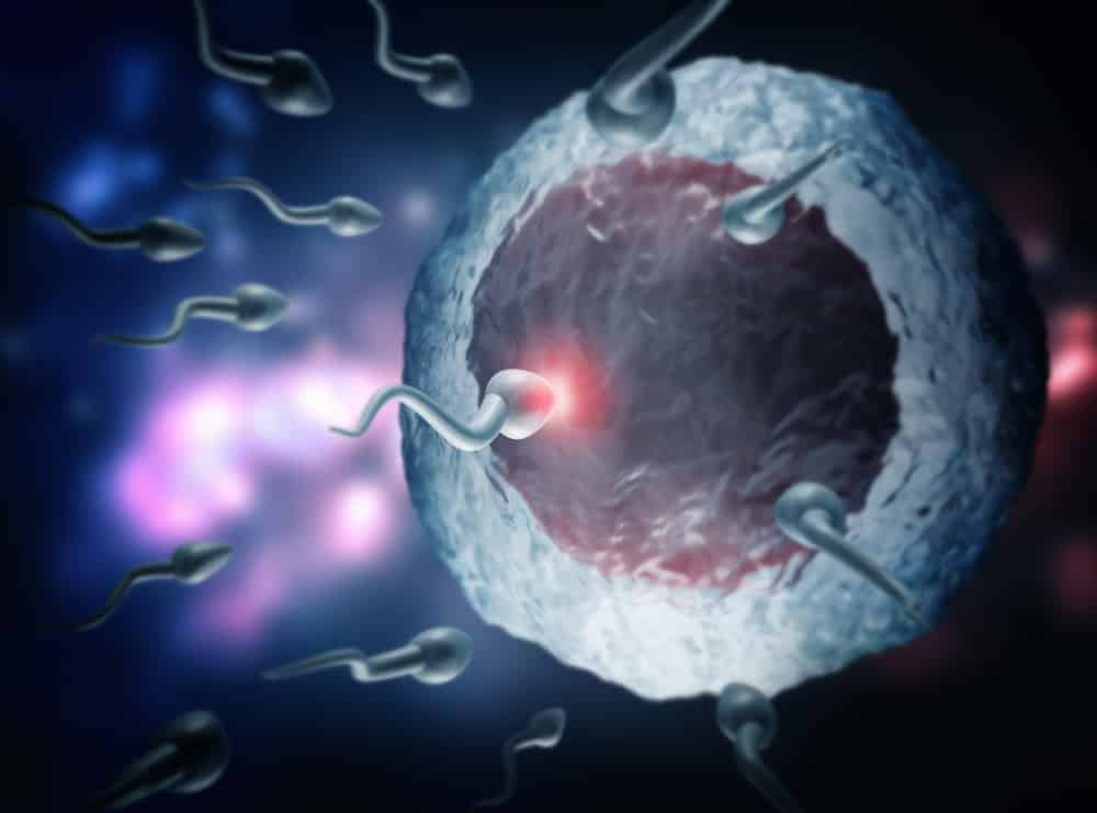 Today's Food Has Caused A 30% Decline In Men's Sperm Counts